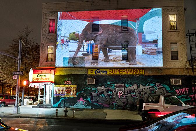 Colleen Plumb, Cindy (Peru, Indiana) at Central Supermarket, Bushwick, Brooklyn, New York City, 2016